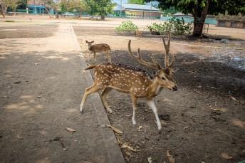 Dear Park at Prambanan